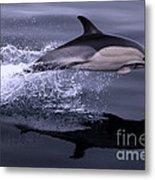 Flying Porpoise Metal Print