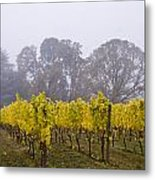 Fog In The Fall Metal Print