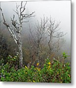 Foggy Day On The Blueridge Metal Print
