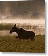 Foggy Stroll Metal Print