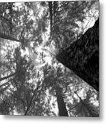 Foggy Treetops Metal Print