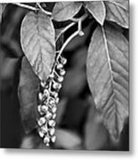 Foliage And Buds Bw Metal Print