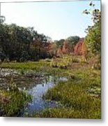 foliage in the swamp lands of CT Metal Print