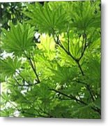 Foliage Tree Metal Print