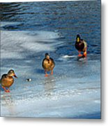 Follow The Leader Duck Style Metal Print