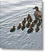 Following The Leader Metal Print