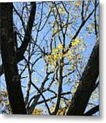 For The Trees Metal Print