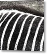 Foraging Spots  Metal Print