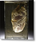 Forensic Evidence, Heart Perforated Metal Print by Science Source