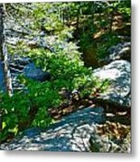 Forest And Stream 2 Metal Print
