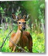 Forest Buck Metal Print