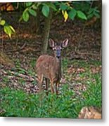 Forest Edge 7365 1754 Metal Print