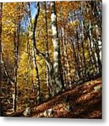 Forest Fall Colors 4 Metal Print