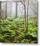 Forest Ferns On A Foggy Morning Metal Print