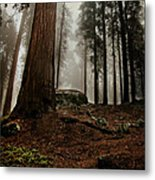 Forest Floor And Fog Metal Print