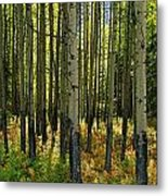 Forest Floor In Autumn, Bow Valley Metal Print