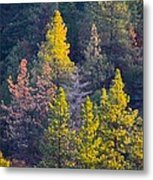 Forest Foliage  Metal Print