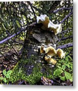 Forest Fungi Metal Print