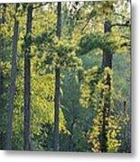 Forest Illumination At Sunset Metal Print