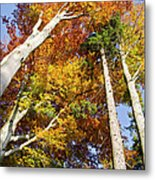 Forest In Autumn Bavaria Germany Metal Print