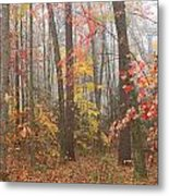 Forest In Late Autumn Metal Print