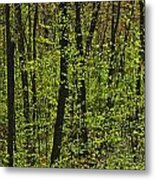 Forest In Spring Foliage, Six Mile Lake Metal Print