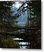 Forest Lake Metal Print