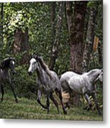 Forest Mares Metal Print
