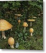 Forest Mushrooms Sprout Metal Print
