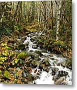 Forest Overflows Metal Print