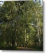 Forest Path 1 Metal Print