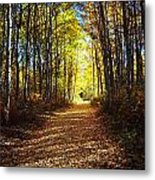 Forest Path In Autumn Metal Print
