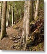 Forest Pathway, Whistler, British Metal Print