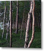 Forest, Shore Of Lake Superior Metal Print