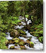 Forest Stream In Tatra Mountains Metal Print
