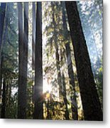 Forest Sun Rays In Olympic National Park Metal Print