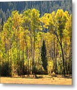 Forested Light Metal Print