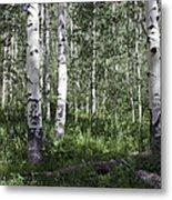 Forever Aspen Trees Metal Print