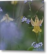 Forget-me-not And Yellow Columbine Metal Print