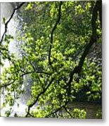 Fountain Behind Tree Branches Metal Print