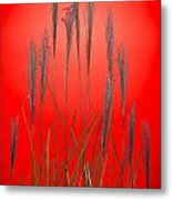Fountain Grass In Red Metal Print