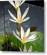 Four Tall Marsh Grass Blooms Metal Print