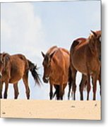Four Wild Mustangs Metal Print