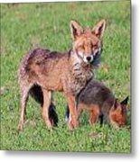 Fox And Baby Metal Print