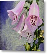 Fox Glove Blue Grunge Metal Print by Bill Cannon