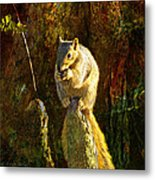 Fox Squirrel Sitting On Cypress Knee Metal Print