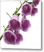 Foxglove Flowers Metal Print
