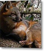 Foxy's Naptime Metal Print