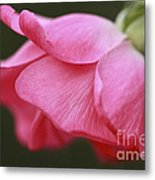 Fragrant Seduction Metal Print
