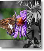 Framed Butterfly Metal Print